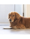 Séjours pour chiens de moins de 2 semaines